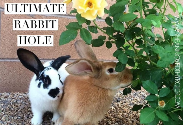 The Ultimate Rabbit Hole #94