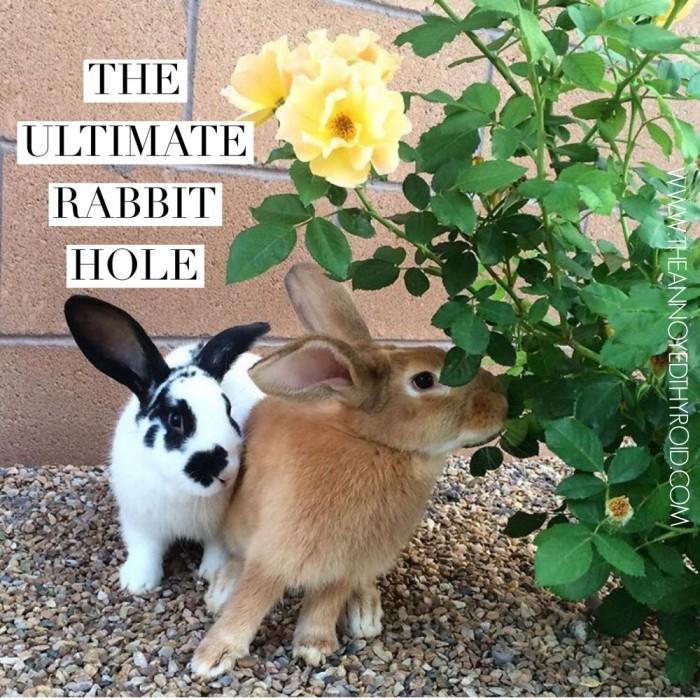 Ultimate Rabbit Hole 41