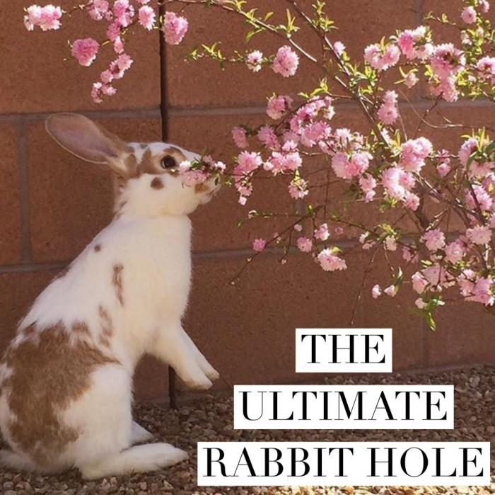 The Ultimate Rabbit Hole #63