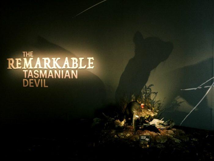 48 hours in Hobart - Tasmanian Museum