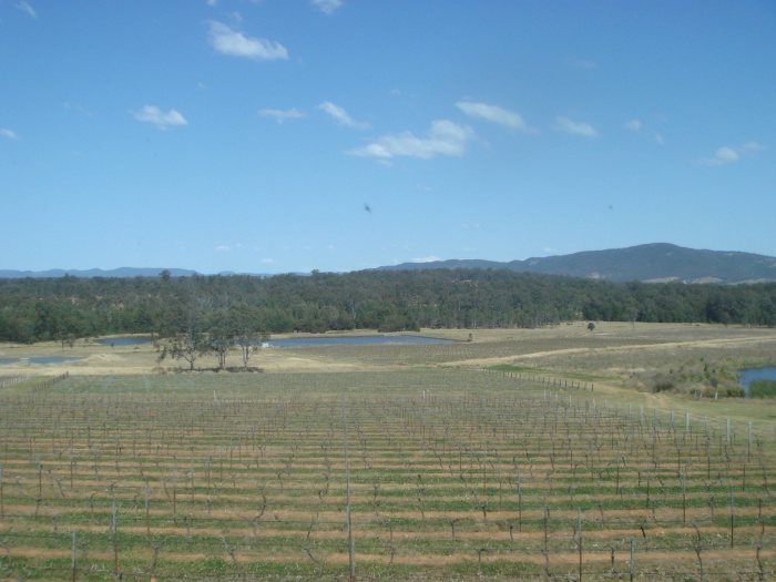Hunter Valley Views