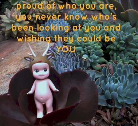 Wednesday Words of Wisdom – Be Proud of Who You Are