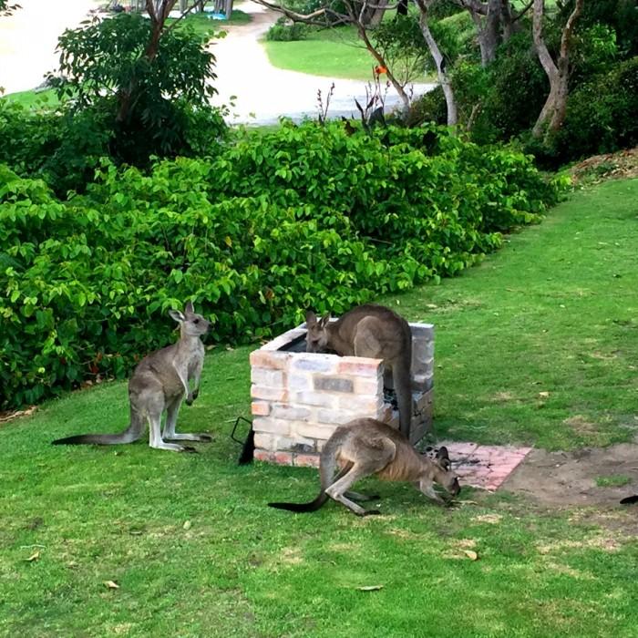 Kangaroo house 1