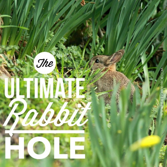 The Ultimate Rabbit Hole