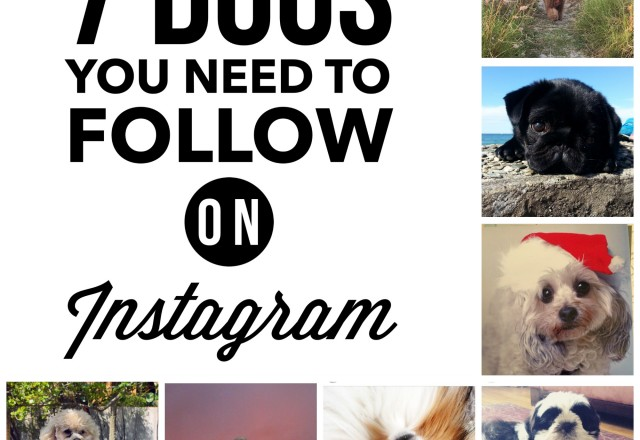 7 Dogs You Need to Follow on Instagram