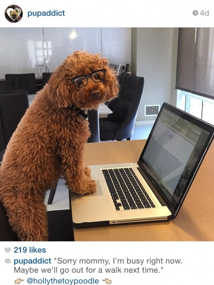 7 top dogs to follow on Instagram