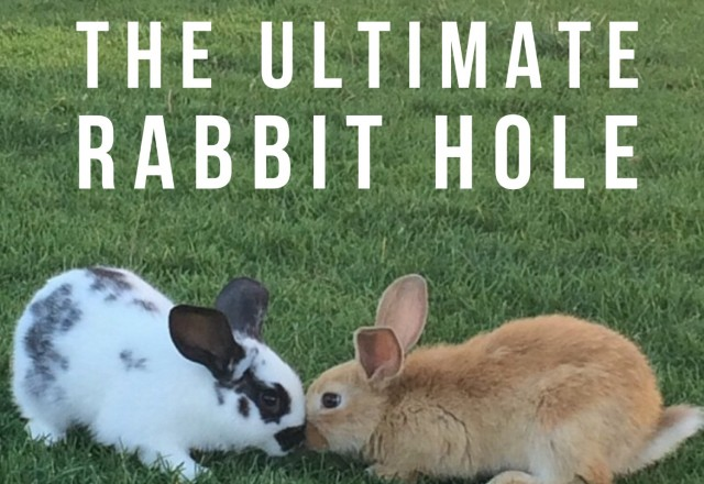 The Ultimate Rabbit Hole #26