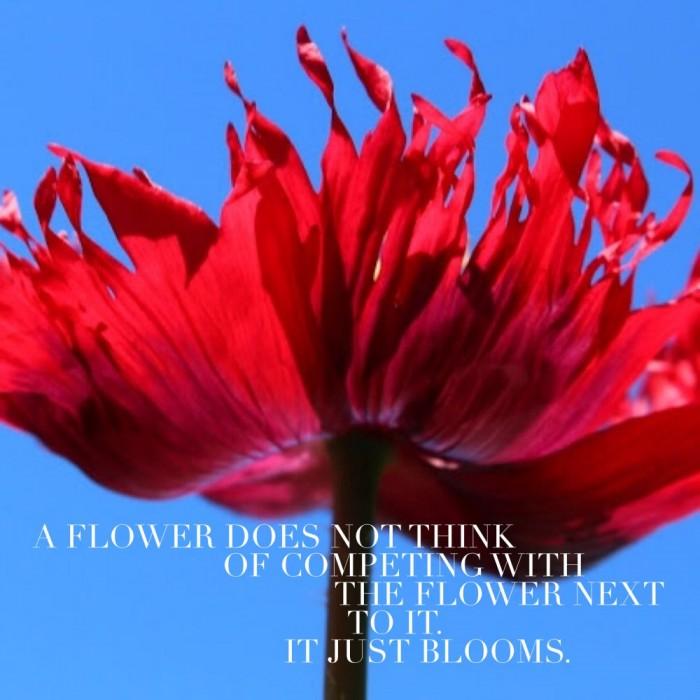 Wednesday Words of Wisdom