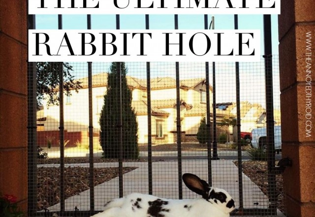 The Ultimate Rabbit Hole #33