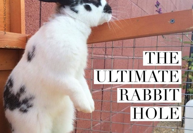 The Ultimate Rabbit Hole #37