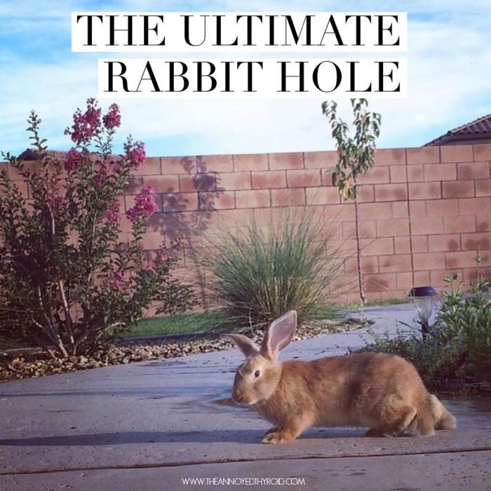 The Ultimate Rabbit Hole #38