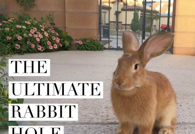 The Ultimate Rabbit Hole #43