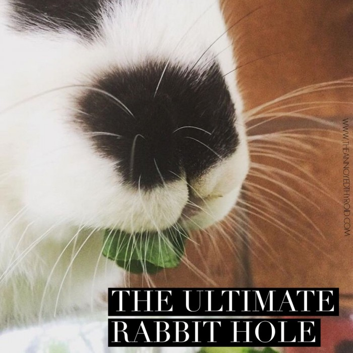 The Ultimate Rabbit Hole #44