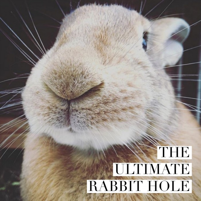 The Ultimate Rabbit Hole #53