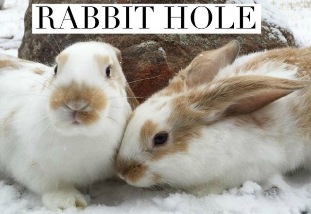The Ultimate Rabbit Hole #55