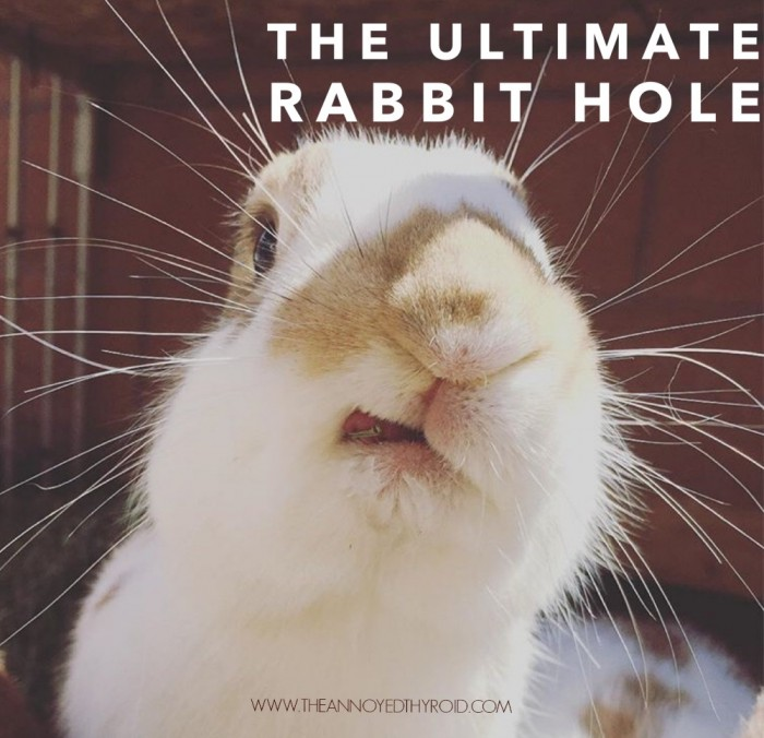 Ultimate Rabbit Hole 61