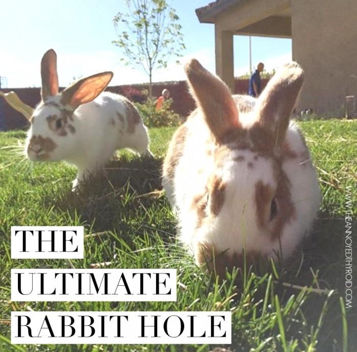 Ultimate Rabbit Hole 71