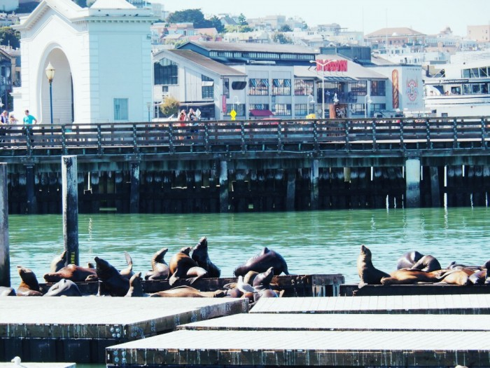 Seals Fisherman's Wharf