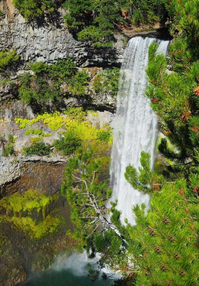 Brandywine Falls - whistler day tour