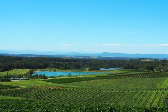 Audrey Wilkinson vineyard view