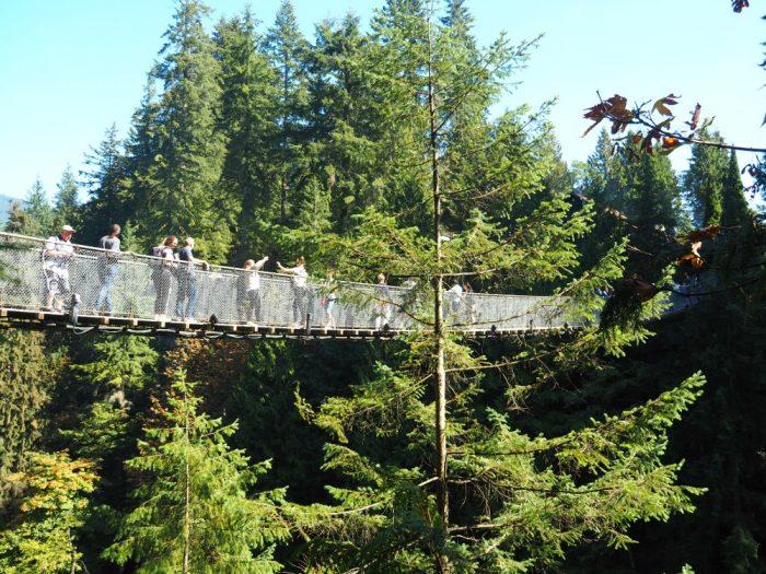 Treetops Adventure - Capillano