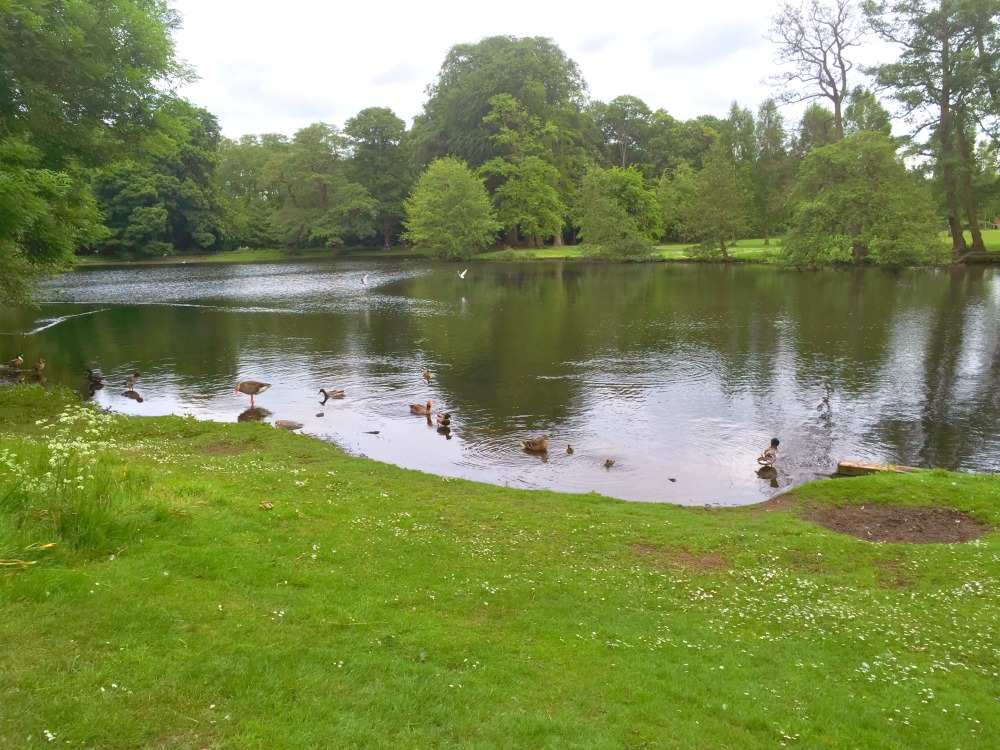 72-hours-in-Lincoln-Boultham-Park-Ducks