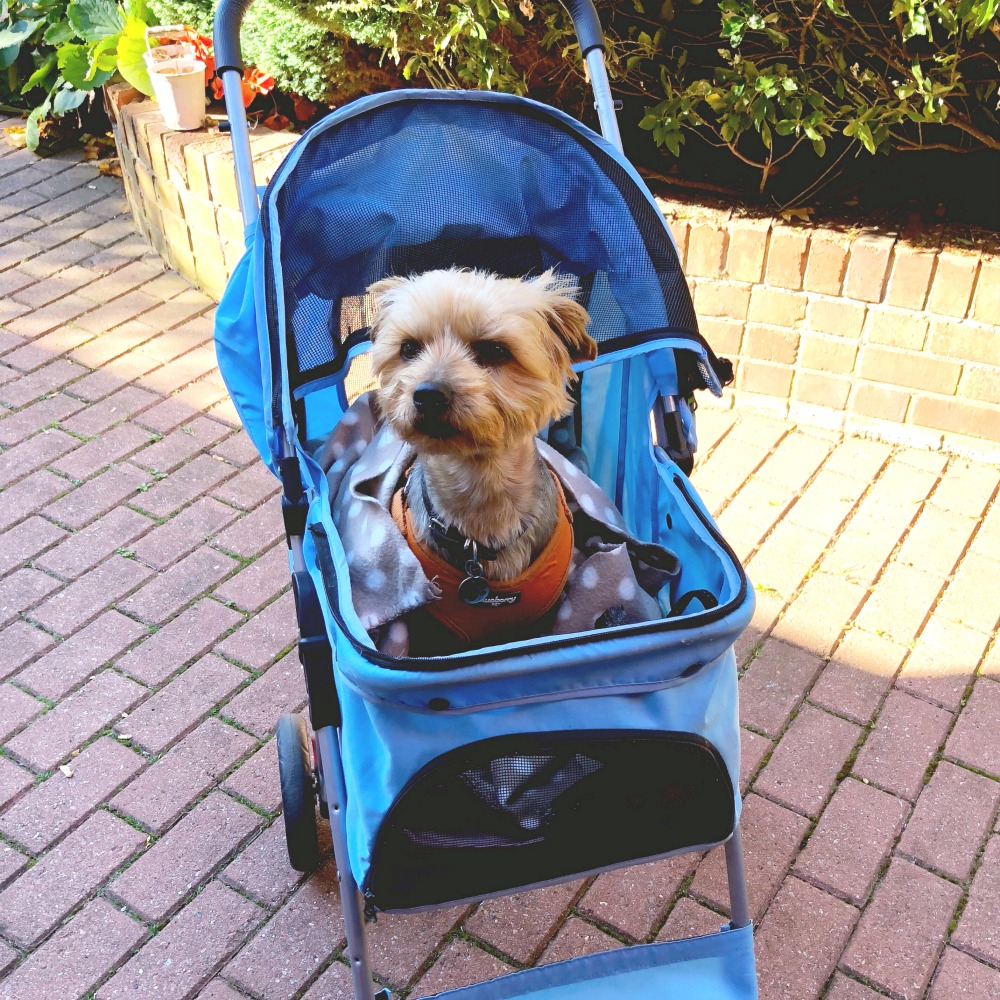 taking stock calvin the dog pram