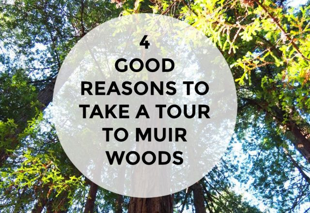4 Good Reasons to Take a Tour to Muir Woods
