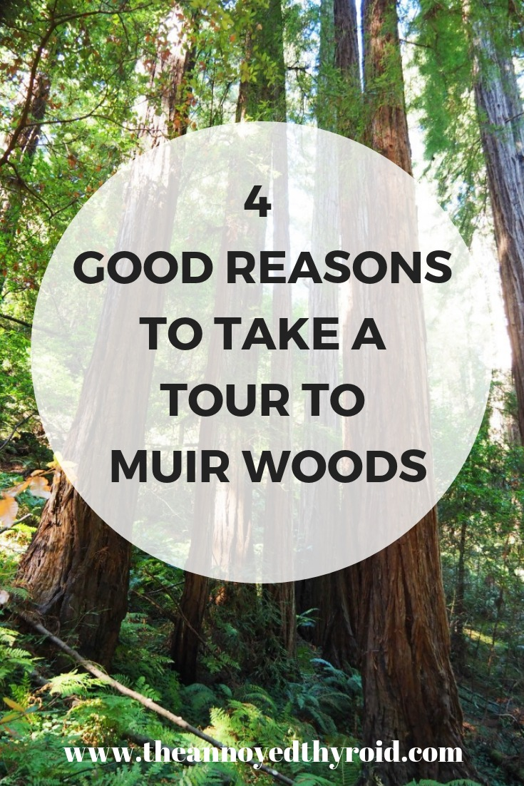 4 Good reasons to take a tour to Muir Woods pin