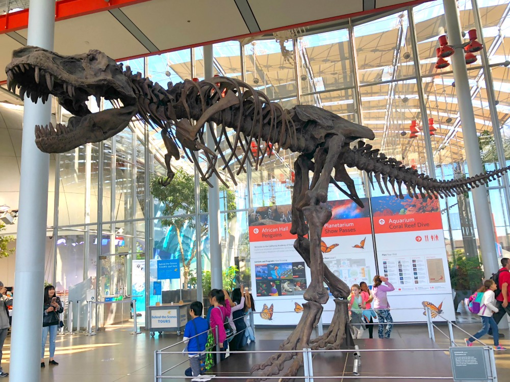 California Academy of Sciences - T-Rex