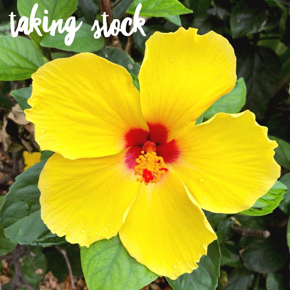 taking stock waikiki 2019