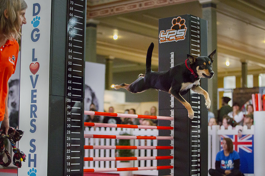 dog lovers show k9 ninja