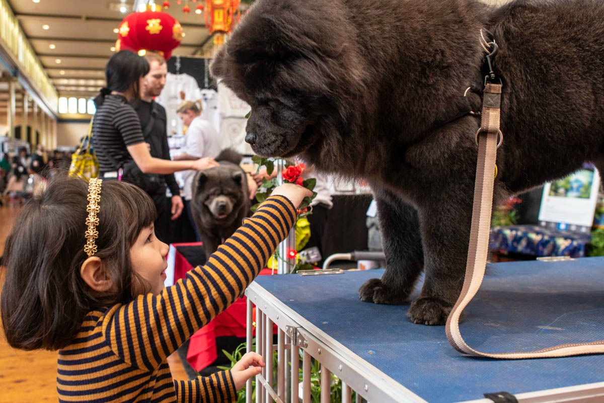 dog-lovers-show-breed-showcase