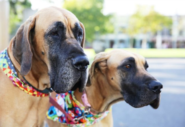 10 Pawsome Reasons to Visit the Dog Lovers Show Sydney