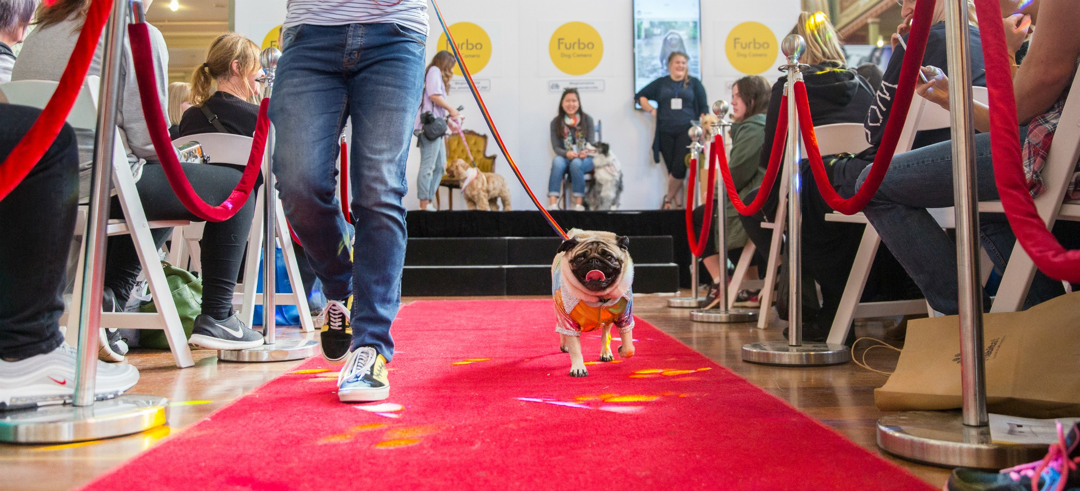 red carpet dog lover show