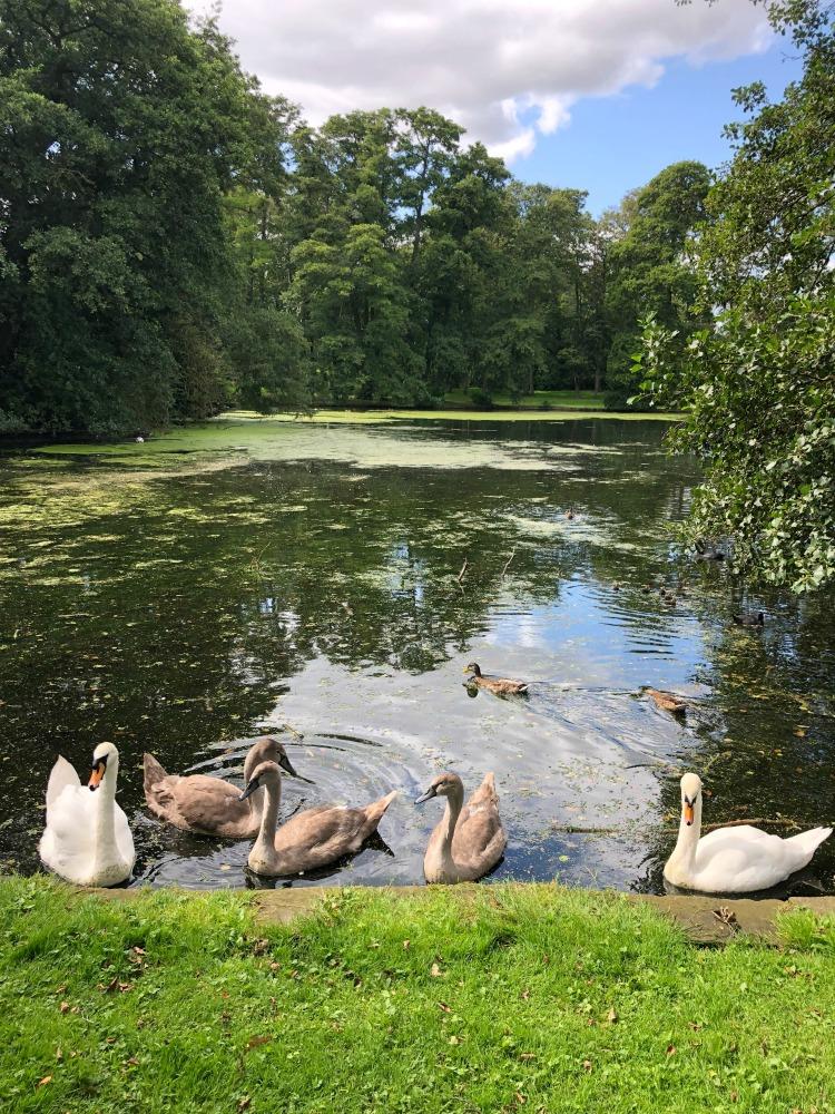 swans_boultham_park