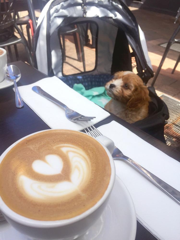 teddy roosevelt coffee