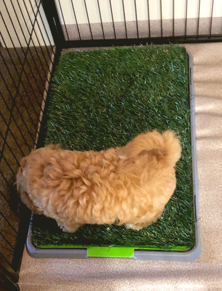 fake grass pet potty