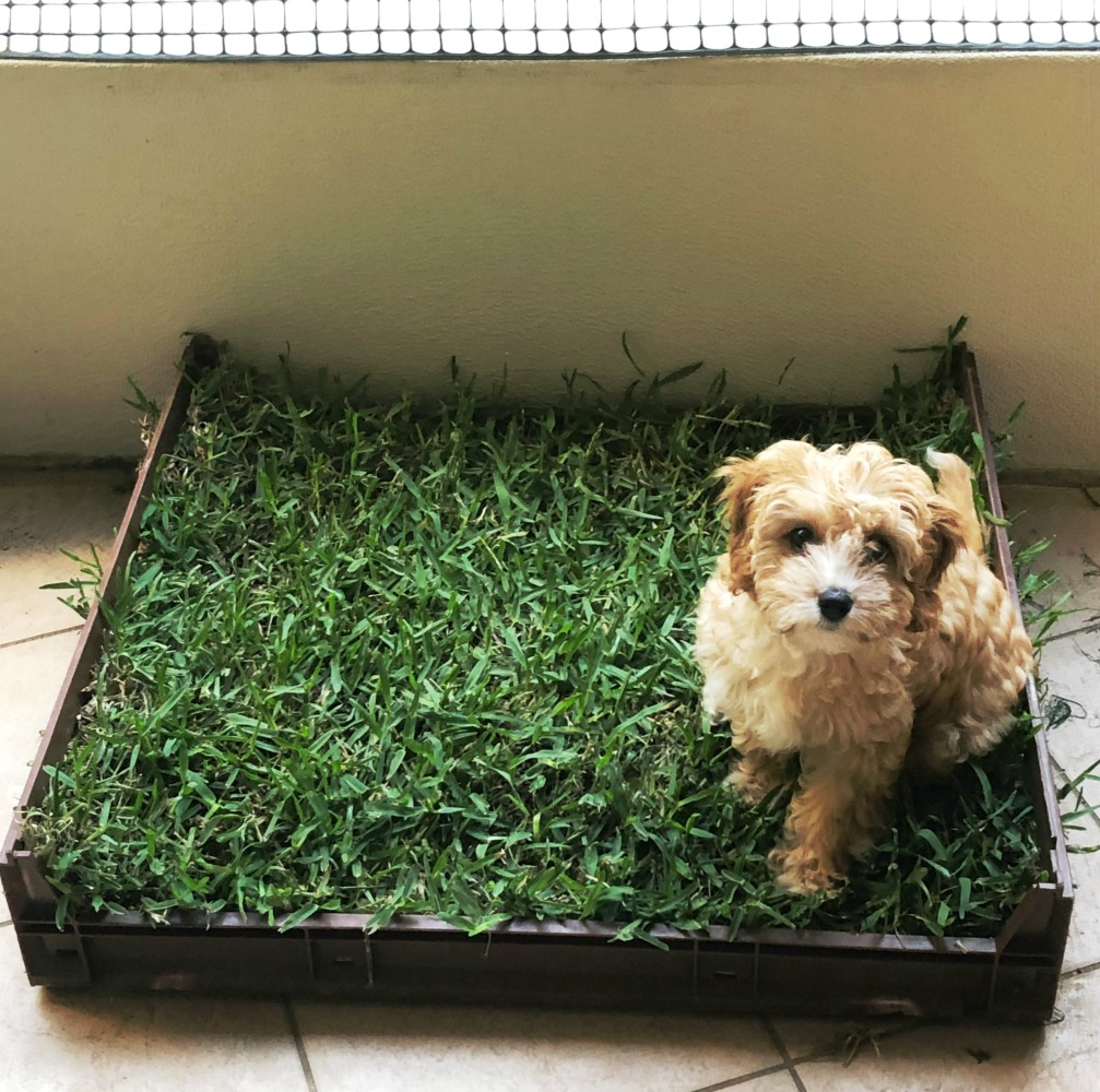 how to make real grass dog toilet