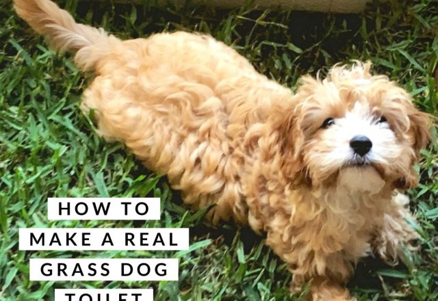 How to Make a Real Grass Dog Toilet on a Budget