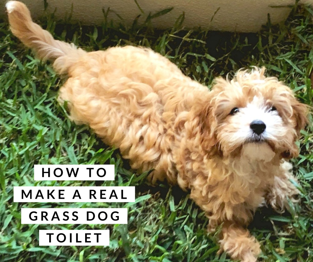 how to make a real grass dog toilet budget