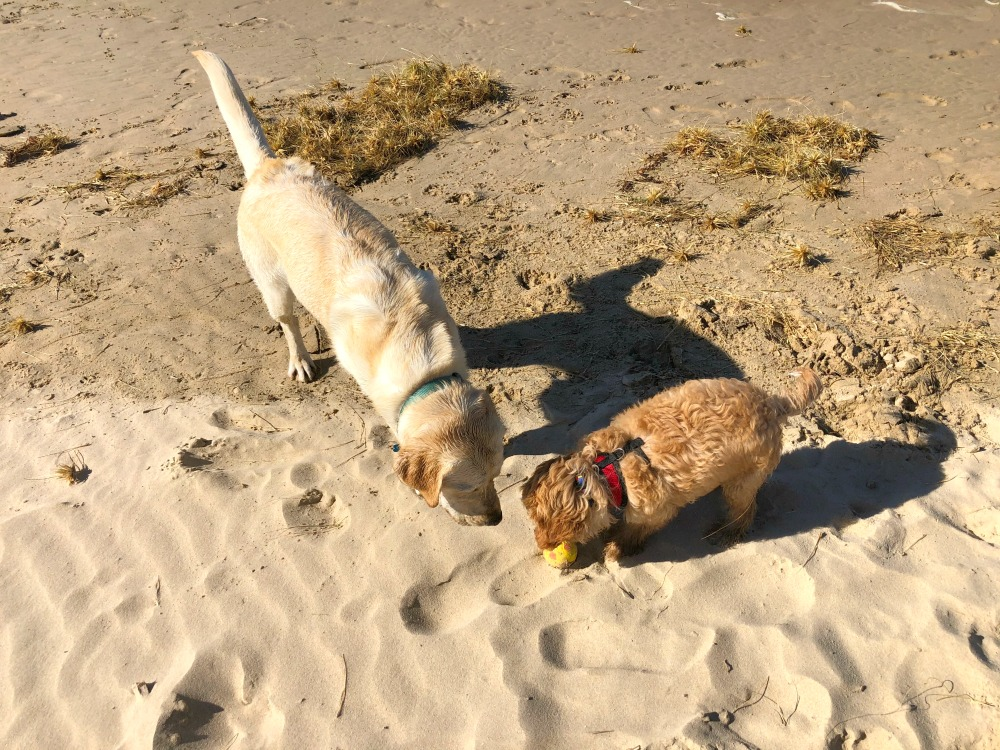 dog friendly birubi beach