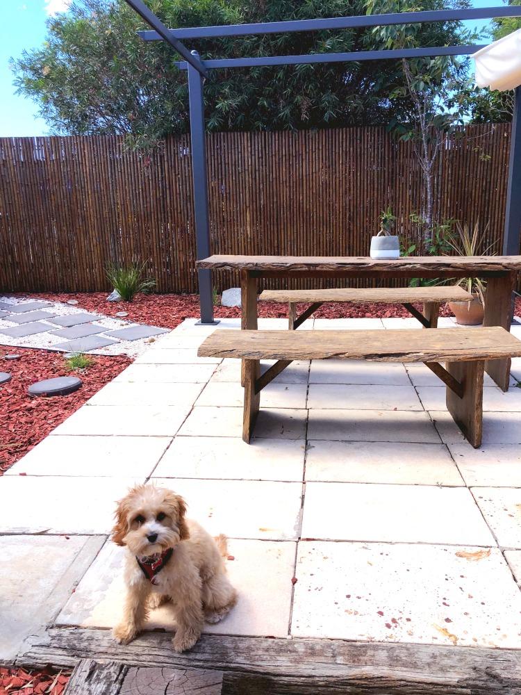 Merimbula pet friendly airbnb courtyard