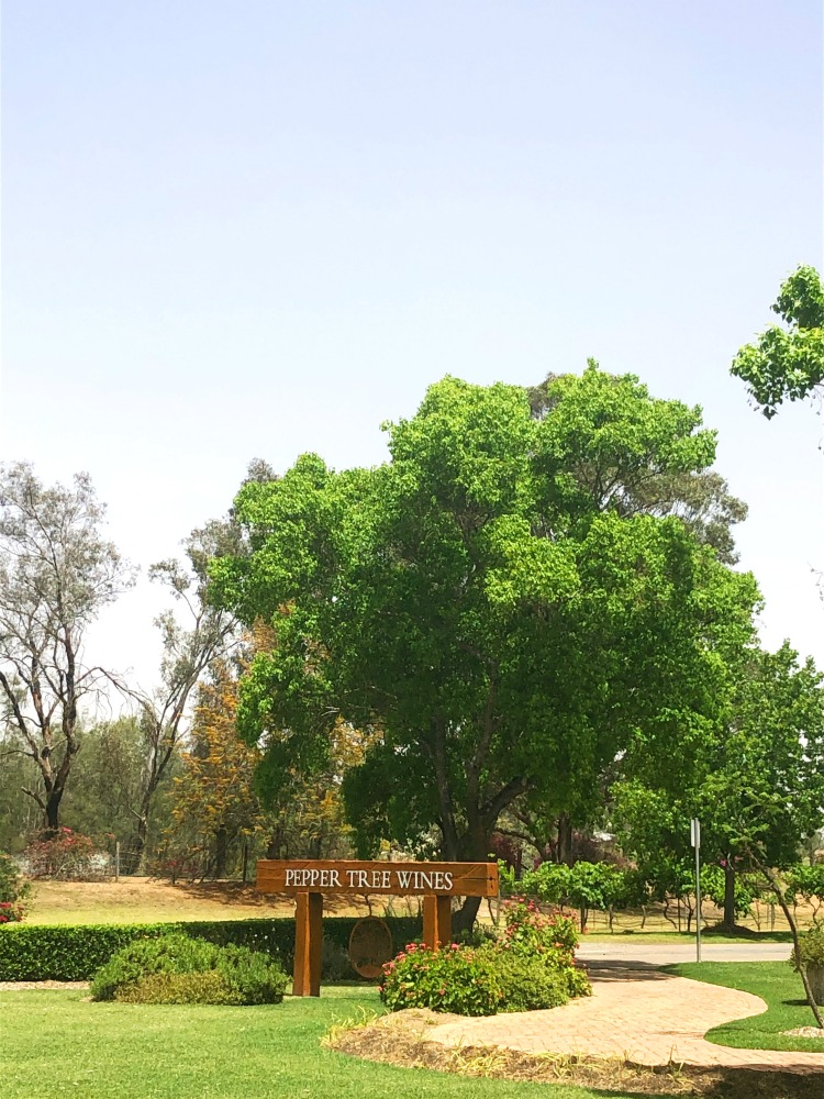 pepper tree wines grounds