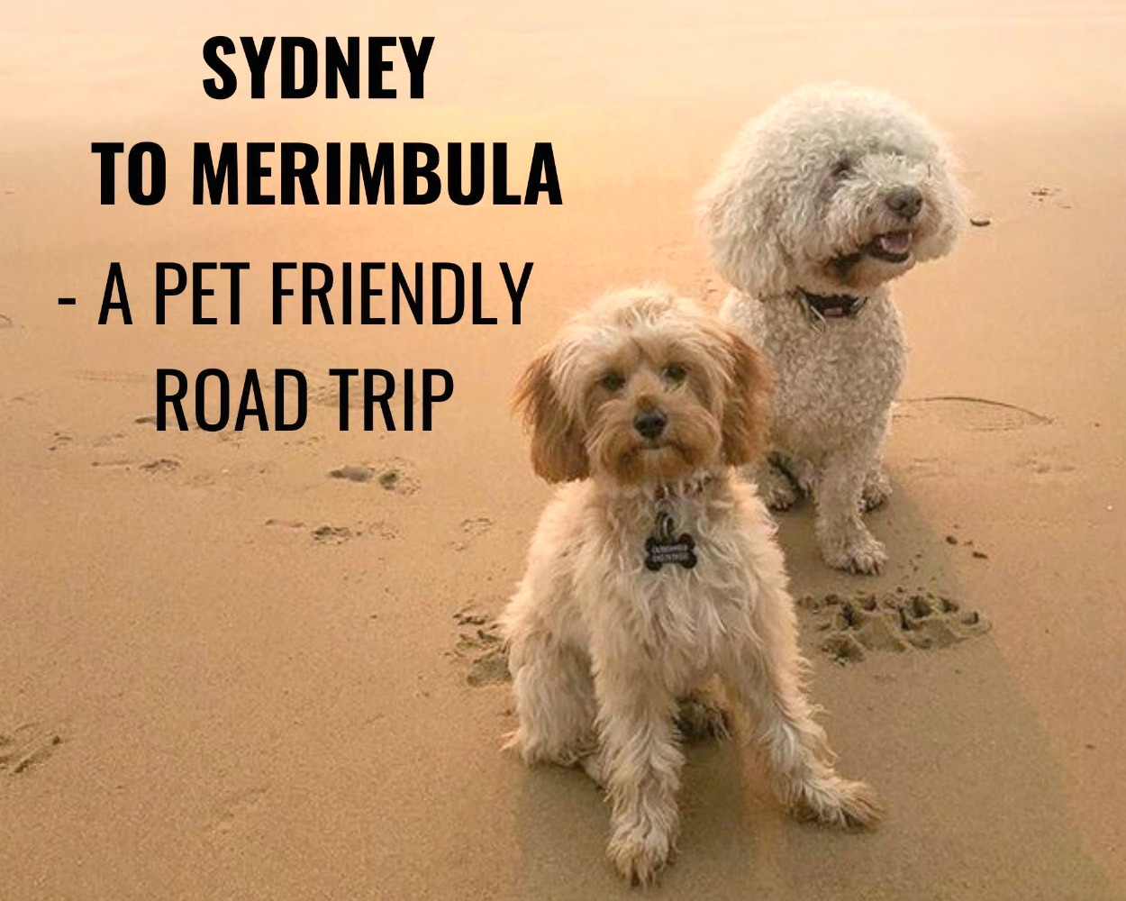 Sydney to Merimbula Pet Friendly Road Trip