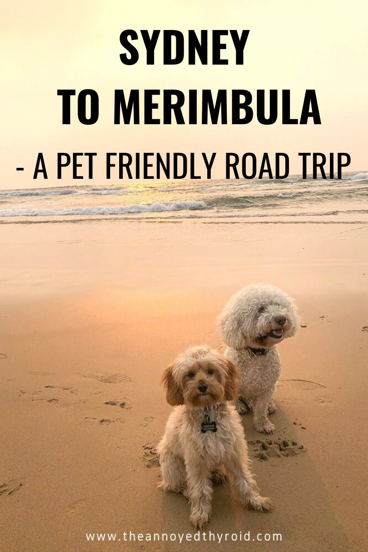 Sydney to Merimbula pet friendly road trip pin
