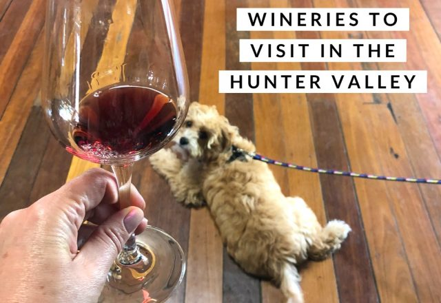 3 Dog Friendly Wineries to Visit in the Hunter Valley