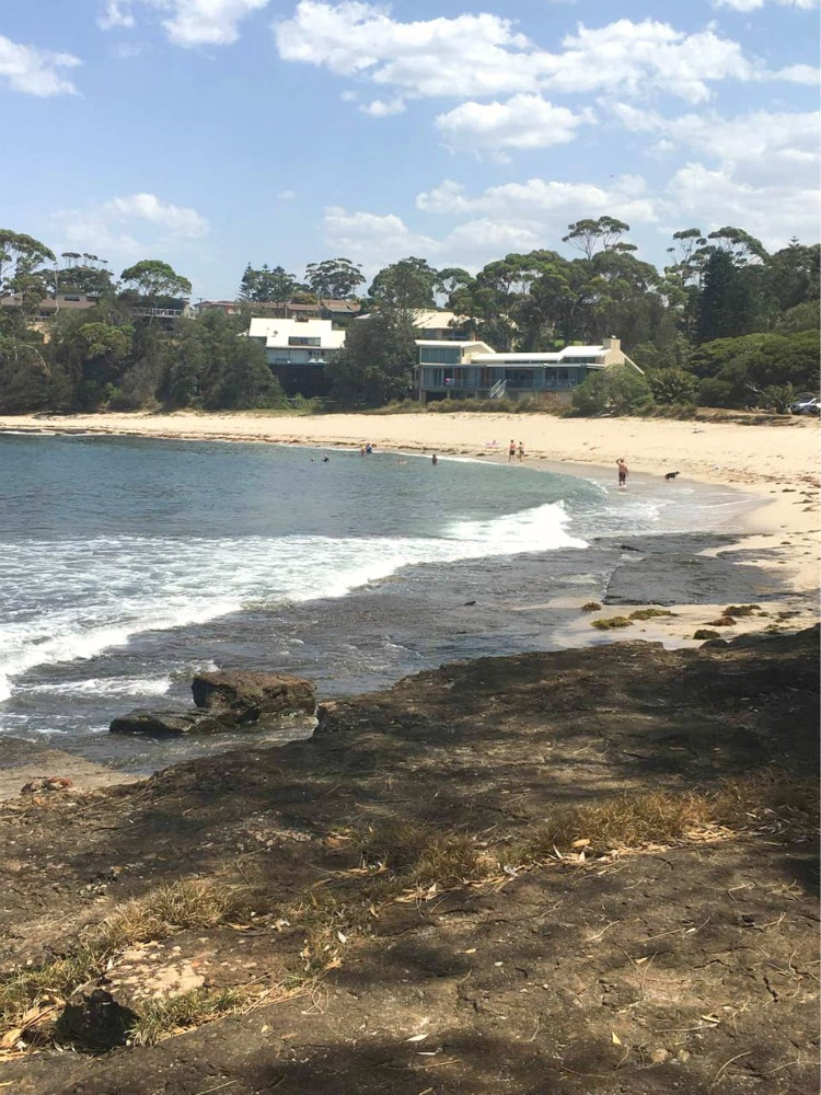 Colliers Beach Dog Friendly