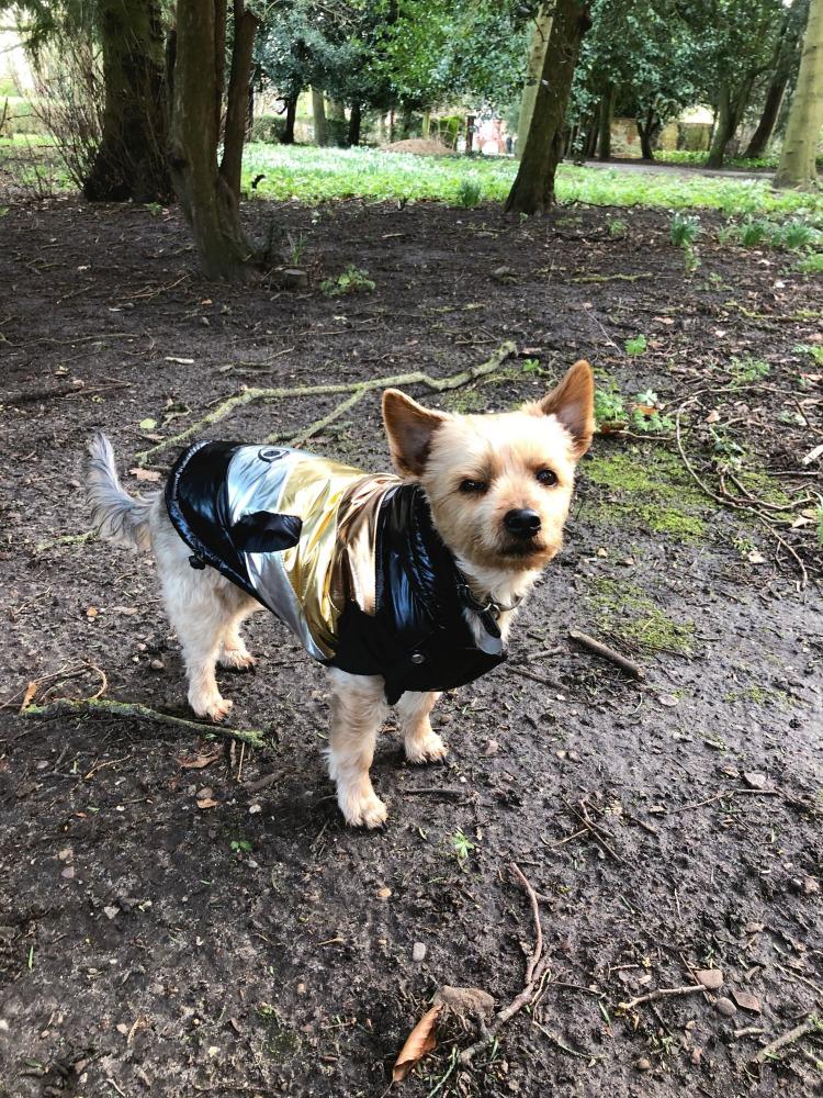 Calvin in his Kanye style coat