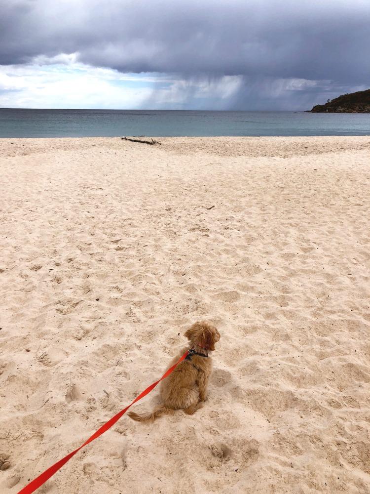 Lion Beach Pambula Dog Friendly